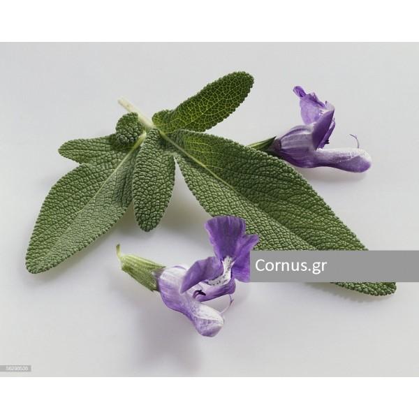 Φύλλα Φασκόμηλου. Καθαρό βάρος 100gr